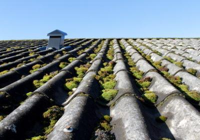 Farlig asbest bør fjernes, siger eksperter